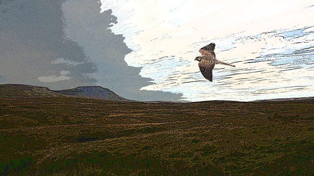 Craig Cheetham / A Kestrel For A Knave